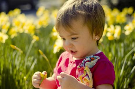 small-daffodil.jpg