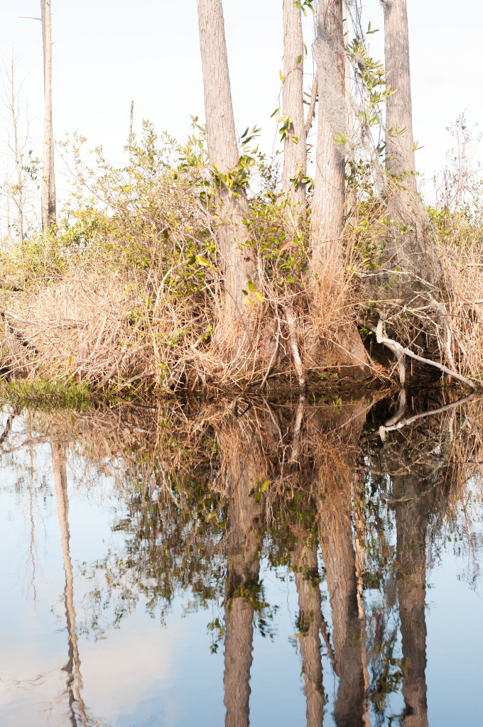 february-13-18-19-tagalongs-papa-david-okefenokee_0010_edited-1